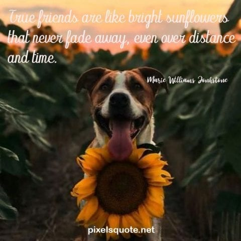 Beautiful Sunflower Quotes 3.
