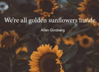 Nice Sunflower Quote.