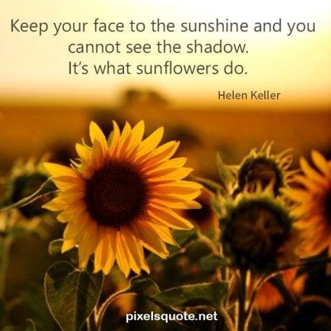 Sunflower Quotes 2.